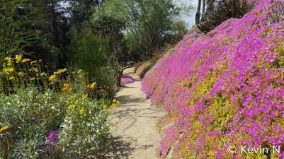 ucr botanic garden spring 2017 (1)
