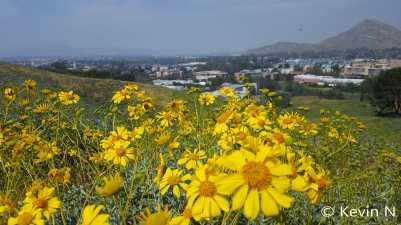 ucr botanic garden spring 2017 (12)