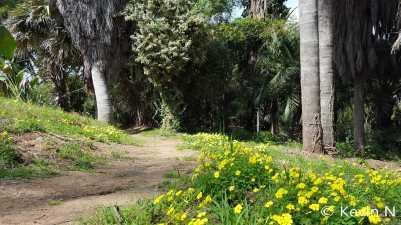 ucr botanic garden spring 2017 (14)