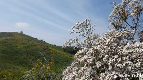 ucr botanic garden spring 2017 (16)
