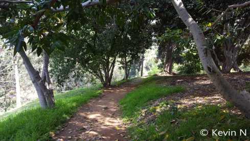 ucr botanic garden spring 2017 (17)