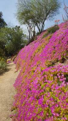 ucr botanic garden spring 2017 (18)