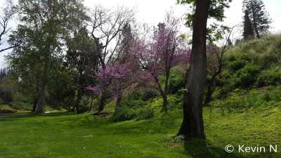 ucr botanic garden spring 2017 (2)