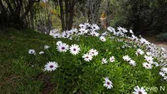 ucr botanic garden spring 2017 (4)