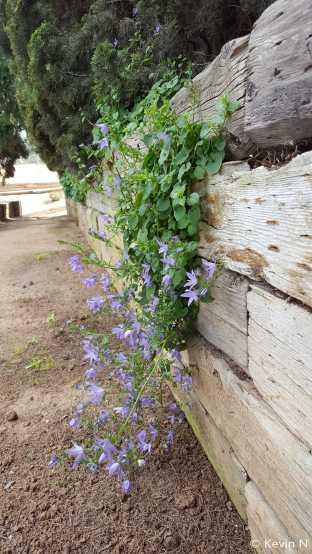 ucr botanic garden spring 2017 (5)
