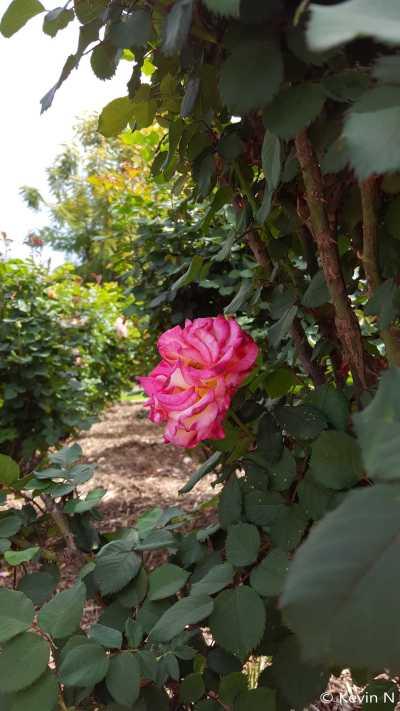 ucr botanic garden spring 2017 (7)