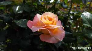 ucr botanic garden spring 2017 (8)