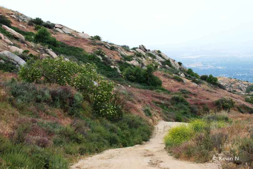 Box Spring Mt Trail (4)