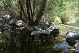 Whitewater Preserve (5)